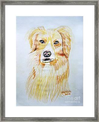 Collie Mix Dog Sketched Art Framed Print