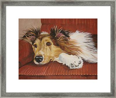 Collie On A Couch Framed Print by Laura Bolle