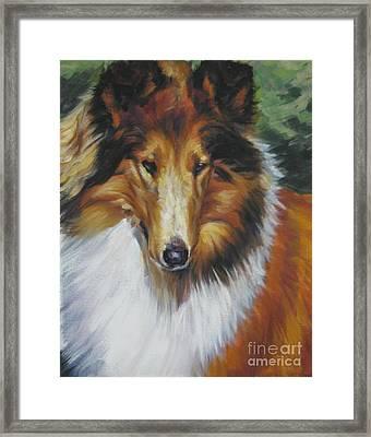 Collie Portrait Framed Print by Lee Ann Shepard