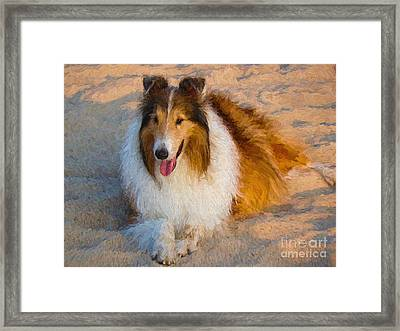 Collie Relaxing In The Sand Framed Print