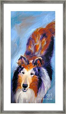Collie Sable Rough 1 Framed Print by Susan A Becker