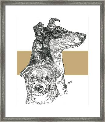 Collie - Smooth Coat Framed Print by Barbara Keith