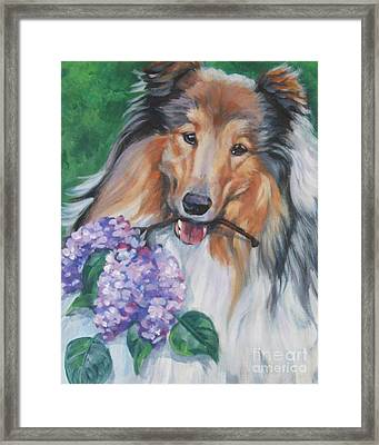 Collie With Lilacs Framed Print by Lee Ann Shepard