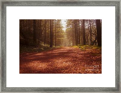 Colligan Autumn 2 Framed Print