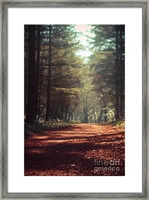Colligan Woods Framed Print