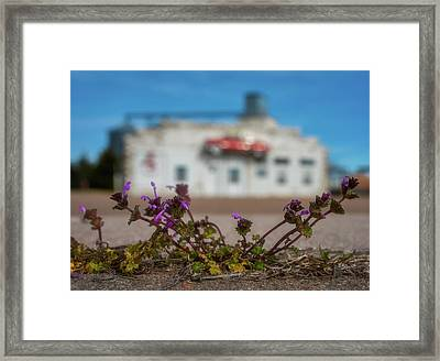 Framed Print featuring the photograph Collyer Sidewalk Blooms by Darren White