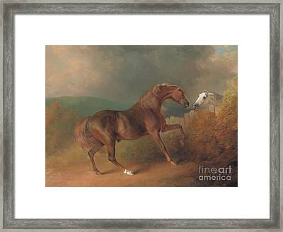 Colonel Thornton's Jupiter With A Grey Mare  Framed Print