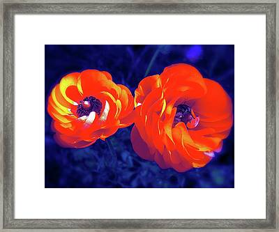 Color 12 Framed Print by Pamela Cooper