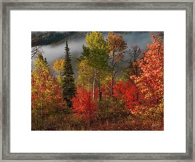 Color And Light Framed Print by Leland D Howard