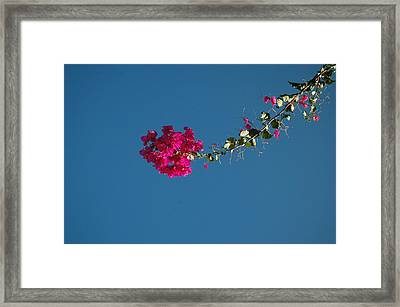 Color And Sky Framed Print by Jean Booth