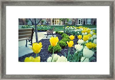 Color At College Framed Print by Dustin Soph