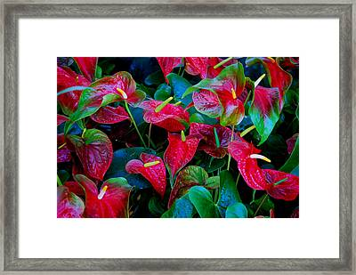 Framed Print featuring the photograph Color Blast by Nancy Bradley