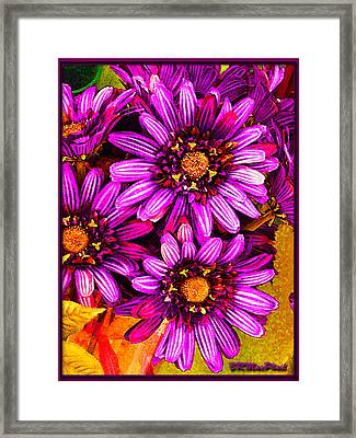 Framed Print featuring the photograph Color Bright by Barbara MacPhail