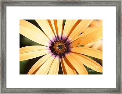 Color Burst Framed Print by Amy Holmes