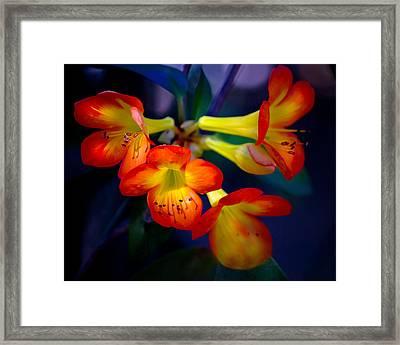 Color Burst Framed Print by Mark Andrew Thomas