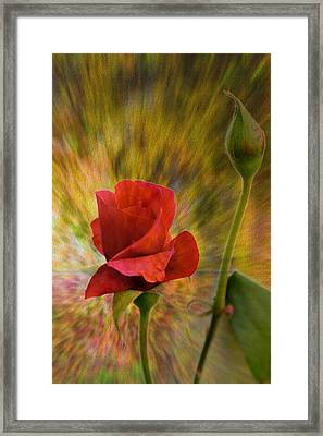 Color Explosion - Rose - Floral Framed Print by Barry Jones
