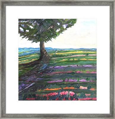 Color Fields Framed Print