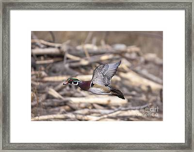 Color Flight II Framed Print