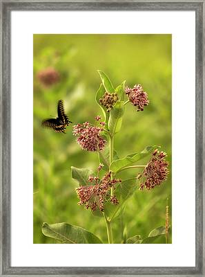 Framed Print featuring the photograph Color In Motion by Scott Bean