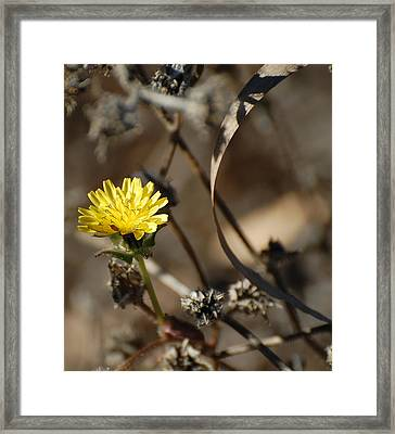 Color In The Brush Framed Print by Jean Booth