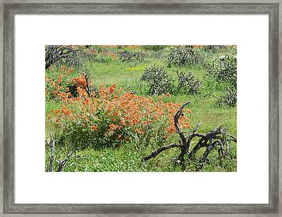 Color In The Desert Framed Print by Laurel Powell