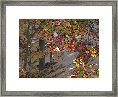 Color In The Dunes Framed Print