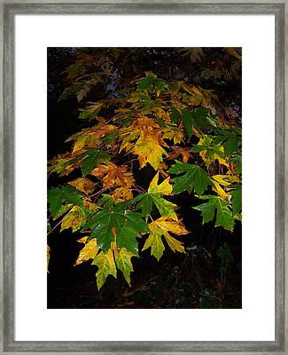 Color Me Fall Framed Print by Ken Day