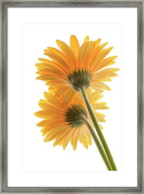 Color Me Happy Framed Print