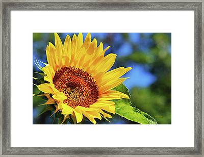 Color Me Happy Sunflower Framed Print
