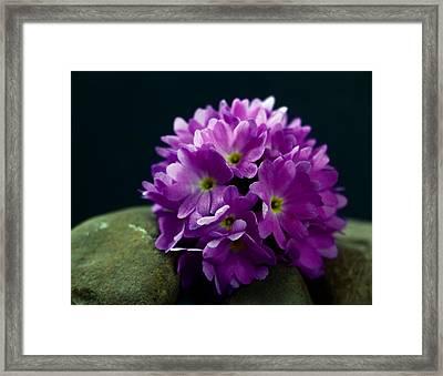 Color Me Purple Framed Print