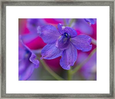 Framed Print featuring the photograph Color Me Spring by Julie Andel