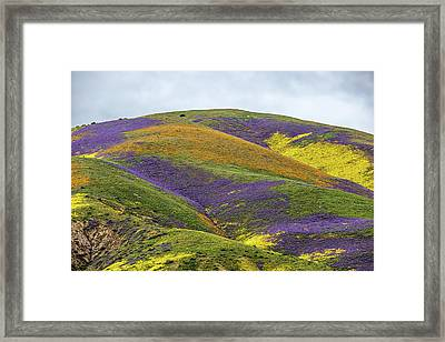 Color Mountain I Framed Print by Peter Tellone