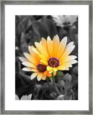 Color My Petals Framed Print