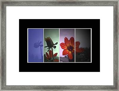 Color My World Framed Print by Holly Ethan