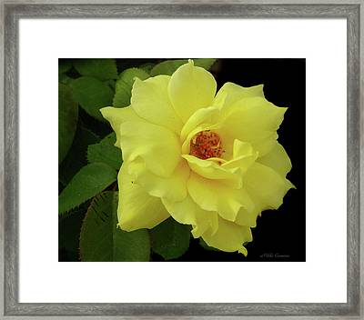 Work Of Nature Framed Print by Mikki Cucuzzo