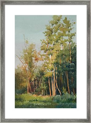 Color Of Light Framed Print by Helal Uddin