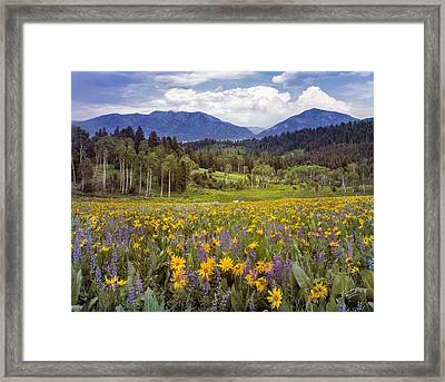 Color Of Spring Framed Print by Leland D Howard