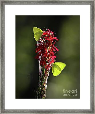 Framed Print featuring the photograph Color On Citico by Douglas Stucky