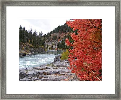 Color On The Snake Framed Print
