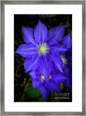 Color Me Purple Framed Print by Dave Bosse