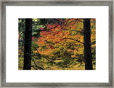 Cascade Mountain Range Fall Color Framed Print