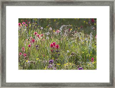 Colorado Alpine Flowers Framed Print by Chris Scroggins