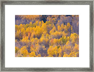 Colorado Autumn Trees Framed Print by James BO  Insogna