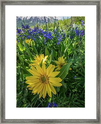 Colorado Bliss Framed Print