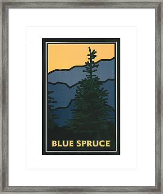 Colorado Blue Spruce Framed Print