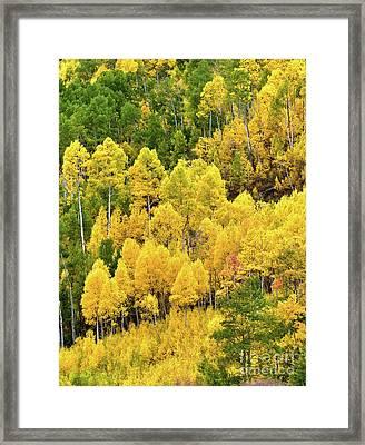 Colorado Colors Framed Print