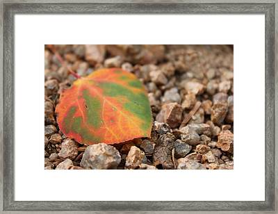 Colorado Fall Colors Framed Print