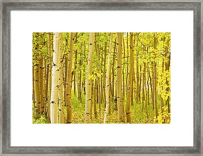 Colorado Fall Foliage Aspen Landscape Framed Print by James BO  Insogna