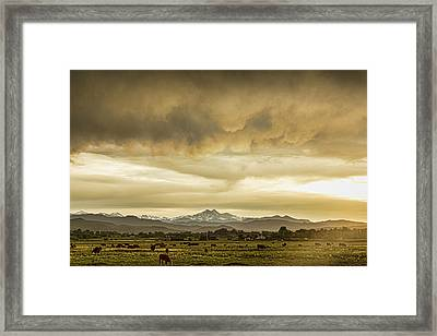 Colorado Grazing Framed Print by James BO Insogna