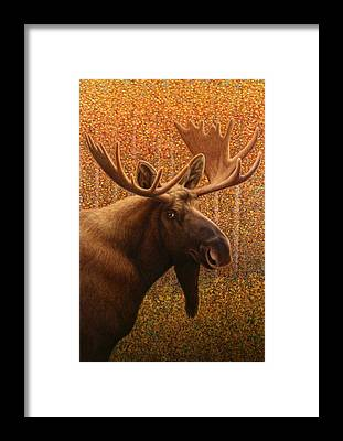 Colorado Wildlife Framed Prints